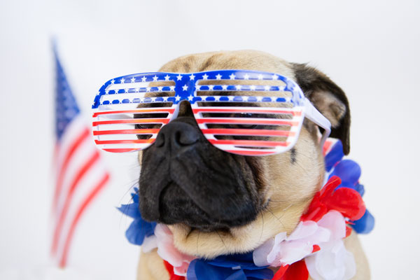 A dog in red, white, and blue sunglasses with a U.S. flag.