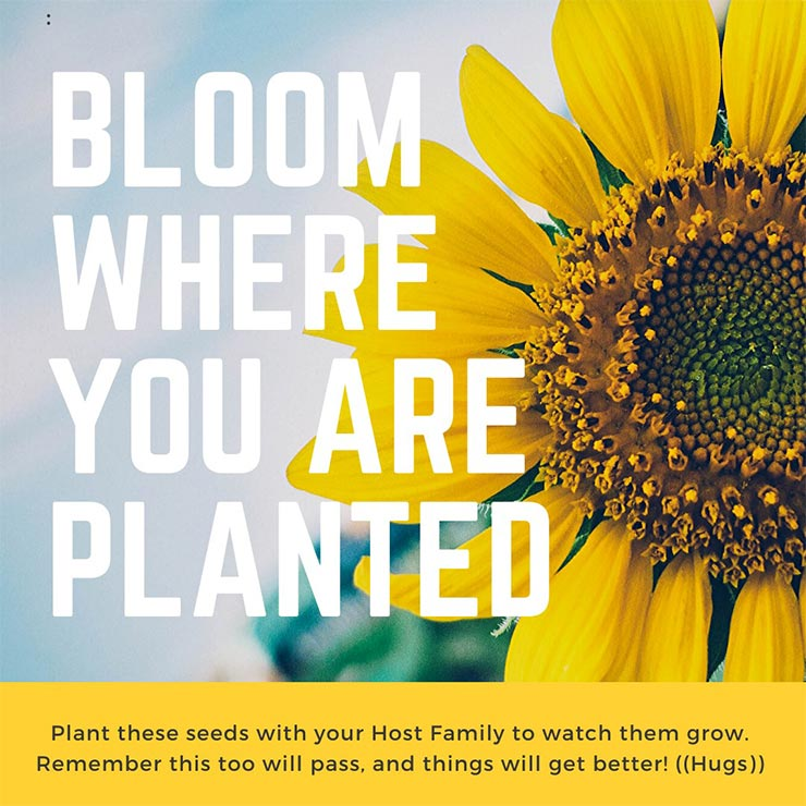 "A Canva design of a sunflower over the text ""Bloom Where You Are Planted"""